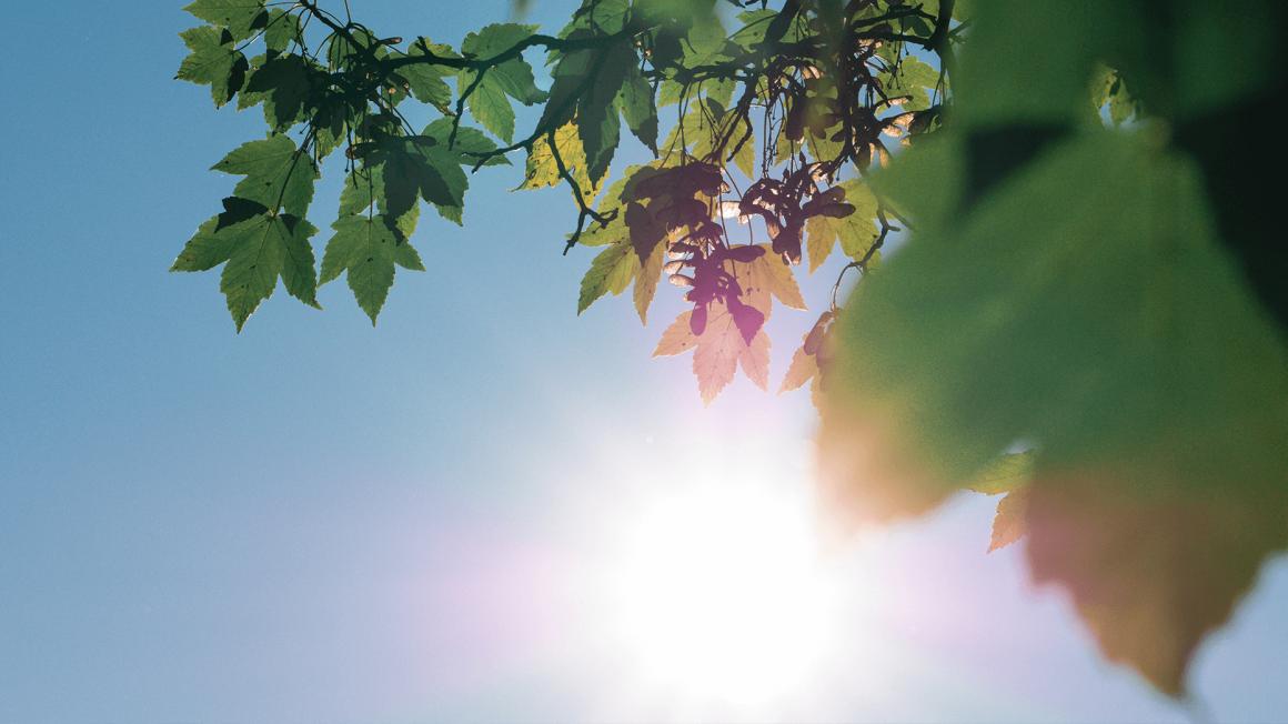 Strahlende Sonne hinter grünen Blättern