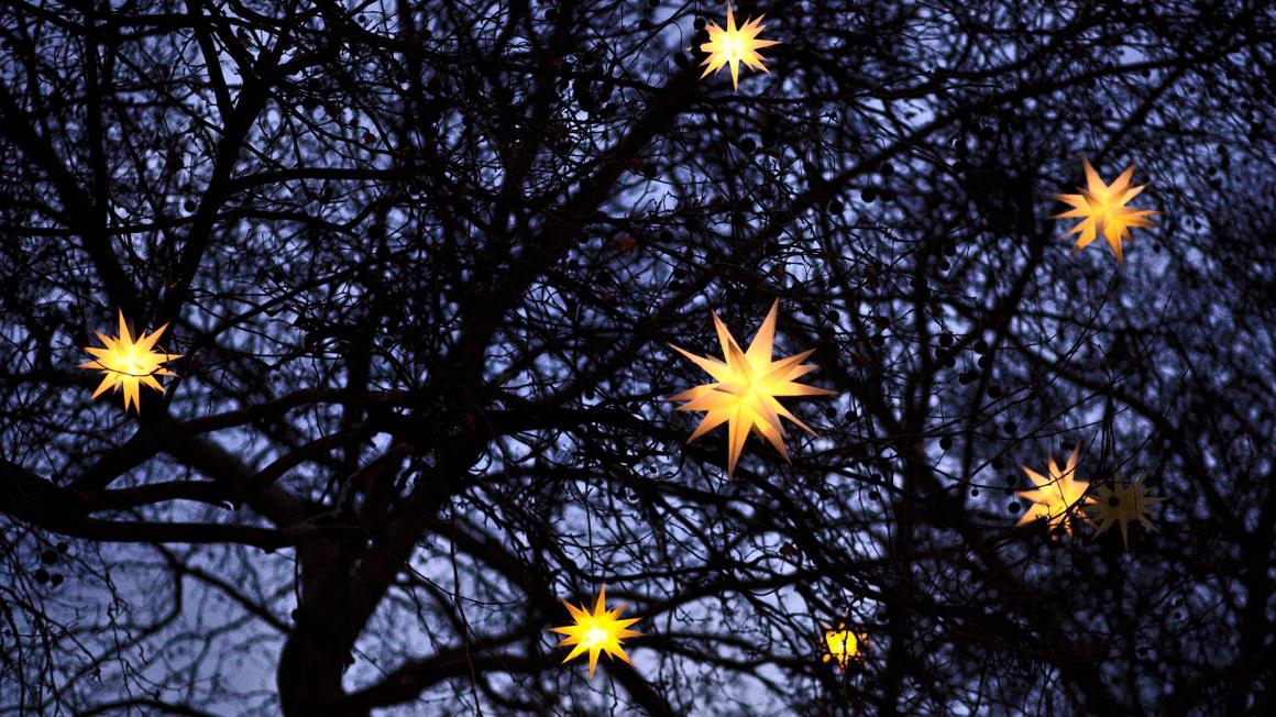 Weihnachtsstern-Lampen in dunklen Baumwipfeln
